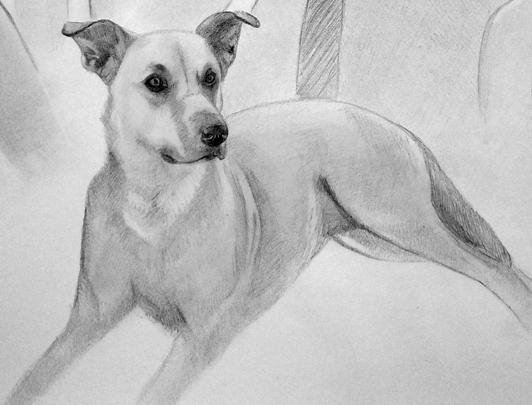 zeichnung_von_Hund.jpg