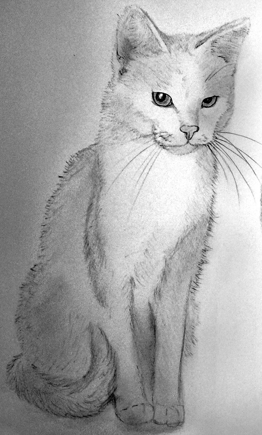 Katze_Portraitzeichnung_nach_Foto_geburtstagsgeschenk.jpg