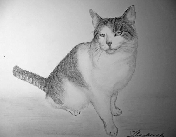 cat_pencil_drawing_from_photo.jpg