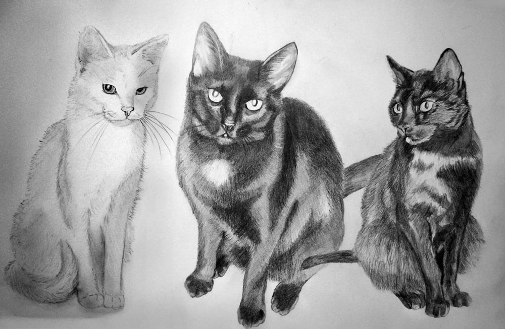 Katze_Zeichnung_vom_Foto_drawing_pencil_pet_portrait.jpg