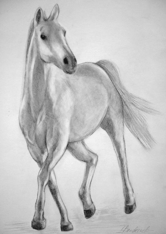 arabisches_Vollblut_Pferd_Portrait.jpg