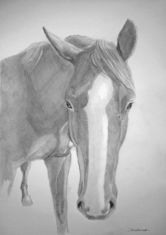 pferd_zeichnung_nach_foto.jpg