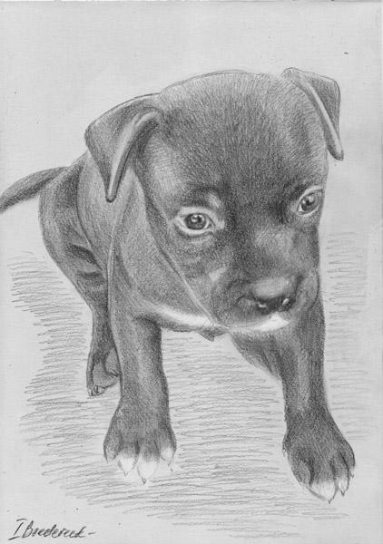 Zeichnung_hund_vom_foto.jpg