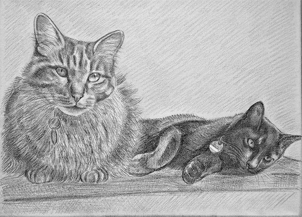 Zeichnung_m_1.jpg