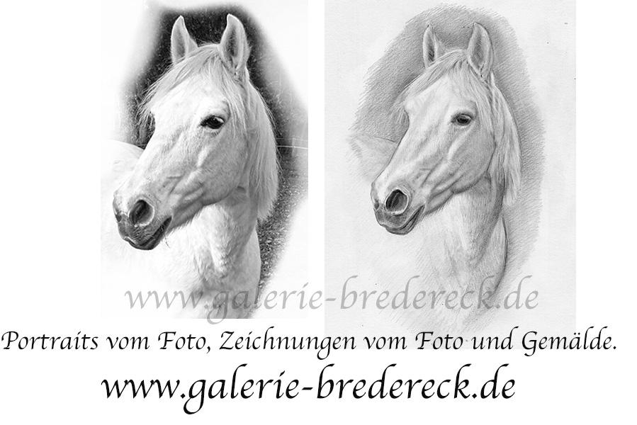 Tierportrait_tier_zeichnung_vom_foto_pferd_portrai_drawing.jpg