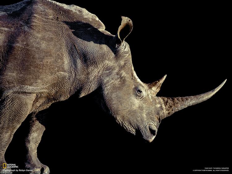 Rhino web.jpg