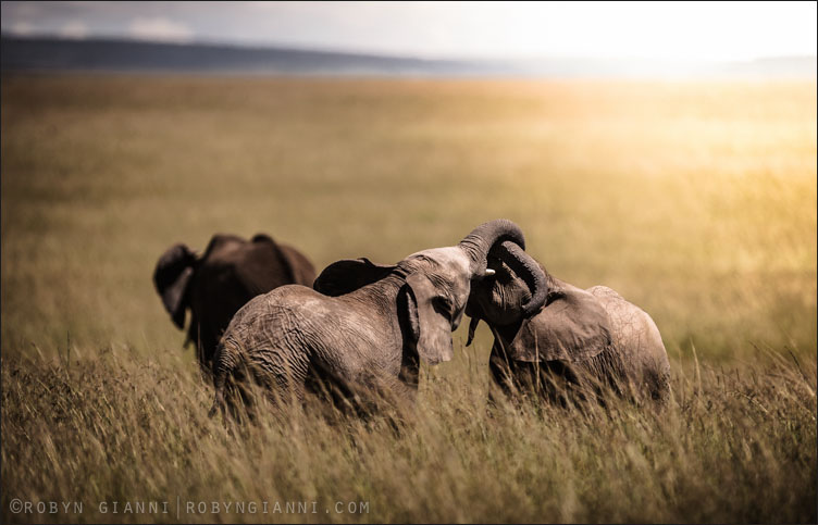 Morning In The Mara, Maasai Mara, Kenya