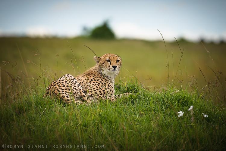 Malaika's Cub, Maasai Mara, Kenya