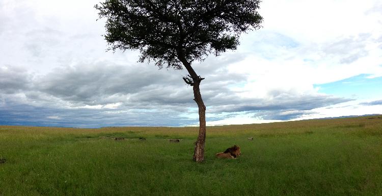 Ol Kiombo pride, Maasai Mara, Kenya