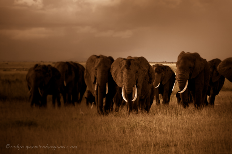 Amboseli National Park, East Africa