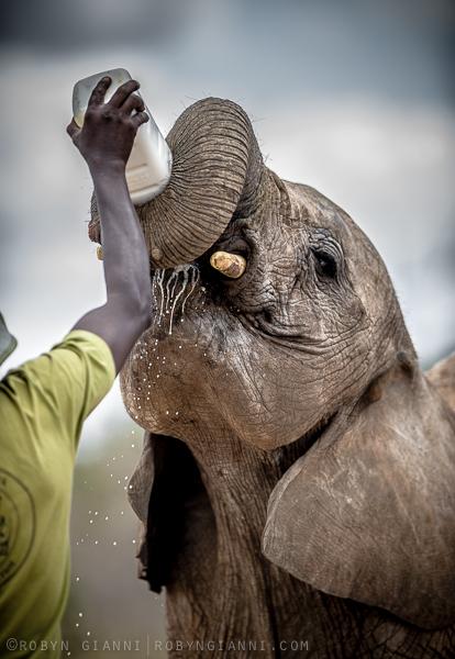 Ithumba, East Africa