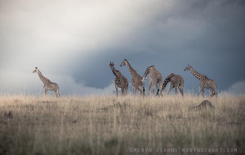 JourneyOfGiraffe