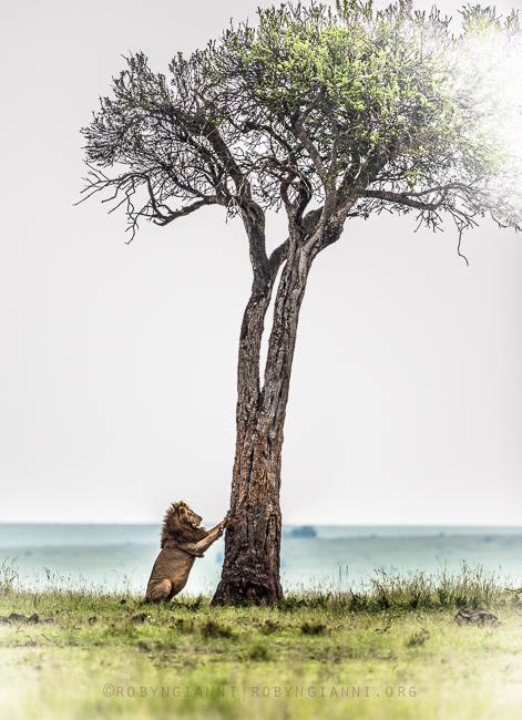 liontree.jpg