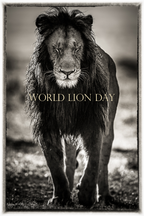 World Lion Day