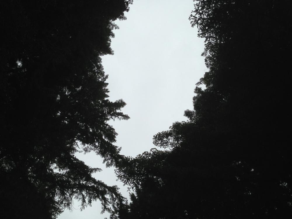 photo (17).JPG