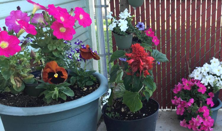 This is taken in one corner of my patio garden.