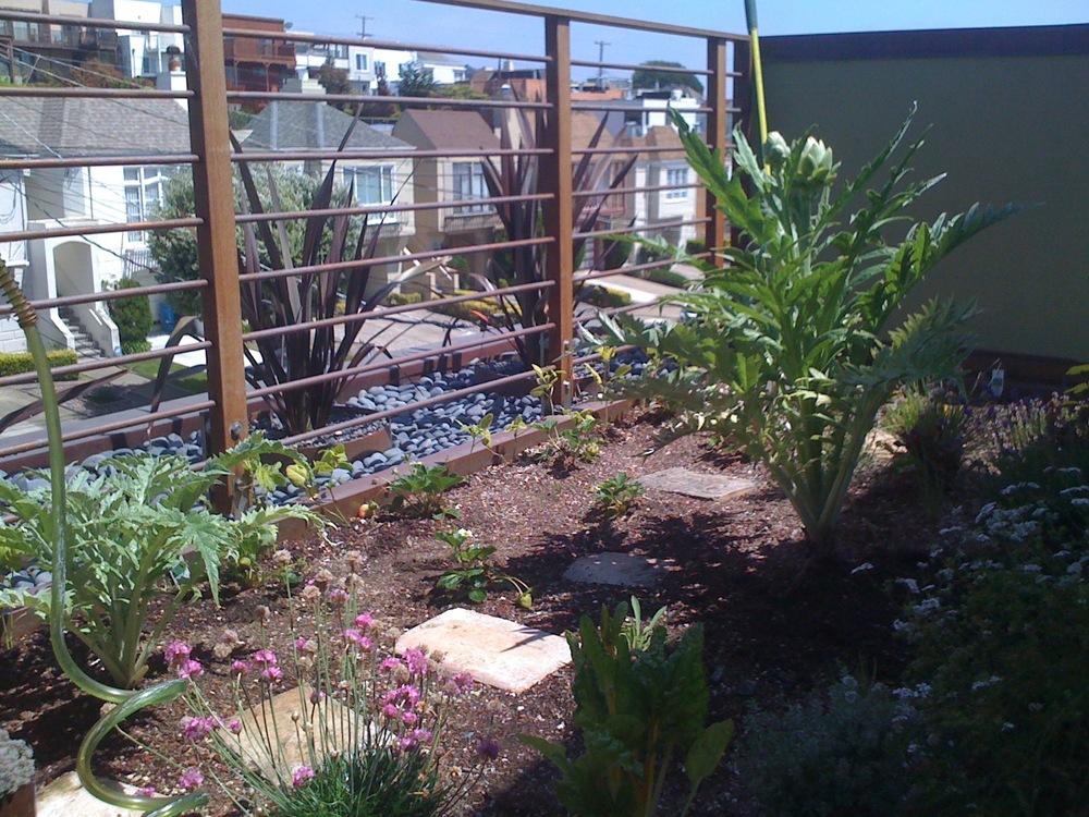 Lane roof garden front.jpg