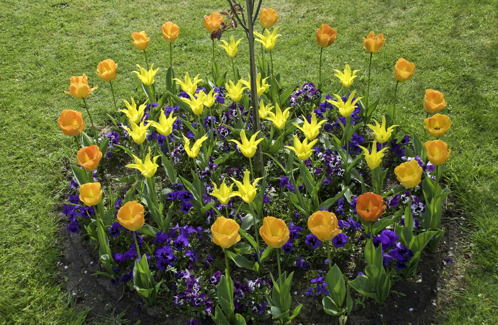 Round Flower Bed : Colourful Round Flower Bed — Ed OKeeffe Photography