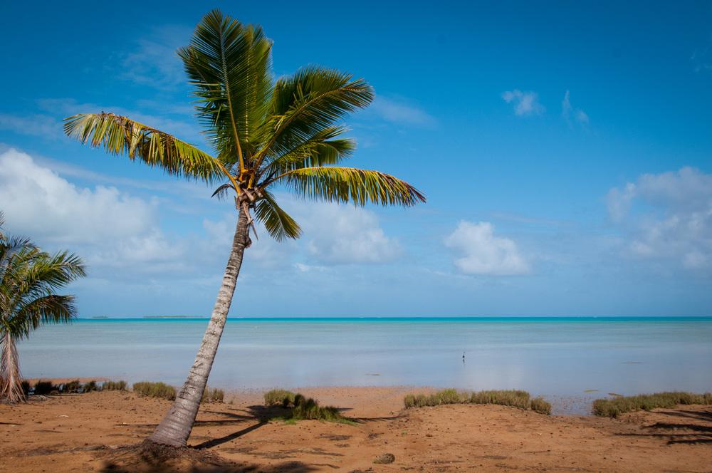 Palm Tree at Aitutaki lagoon