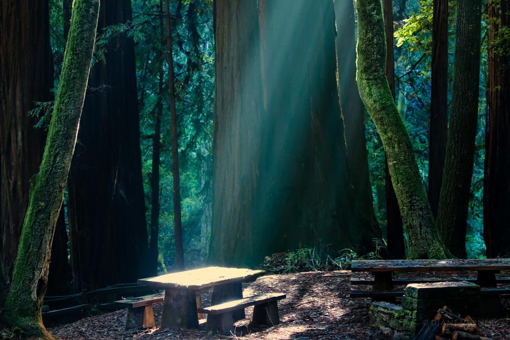 The Sacred Altar
