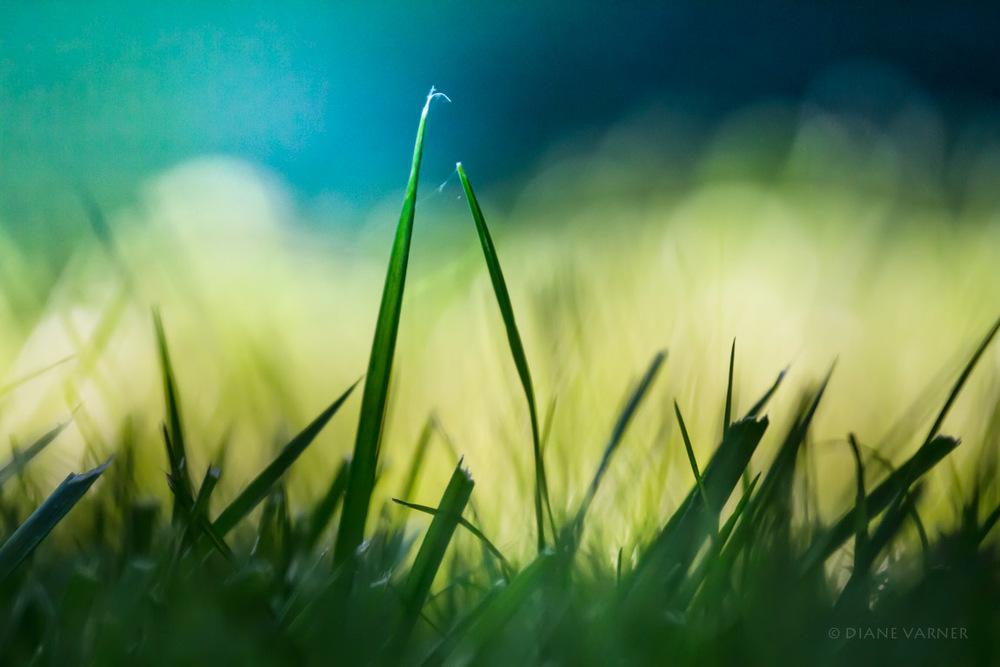 6_24_12_yard_lawn_2878-Edit.jpg