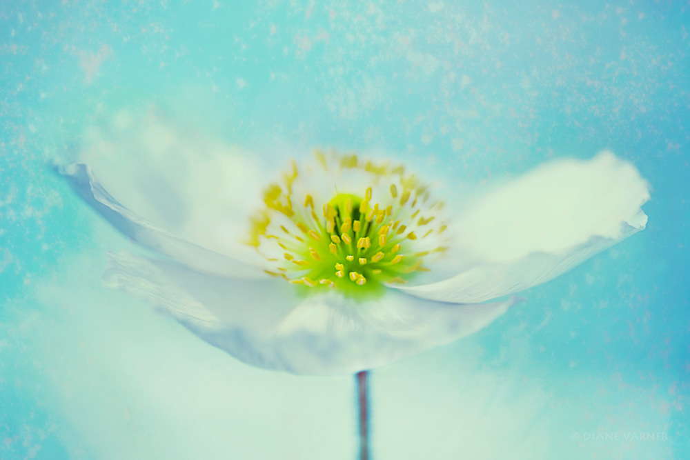 Summer Petals No. 2
