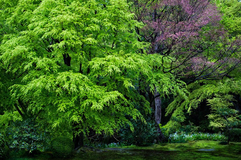Tofuku-ji Temple, Gardens, Kyoto - 2