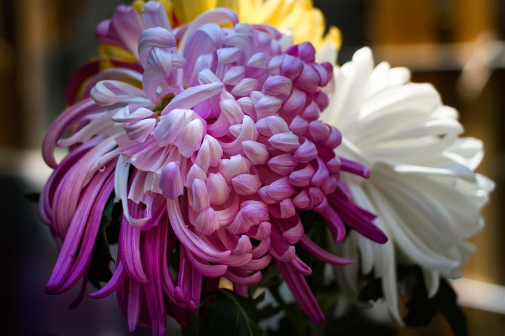Flowers for Deceased - Tokyo