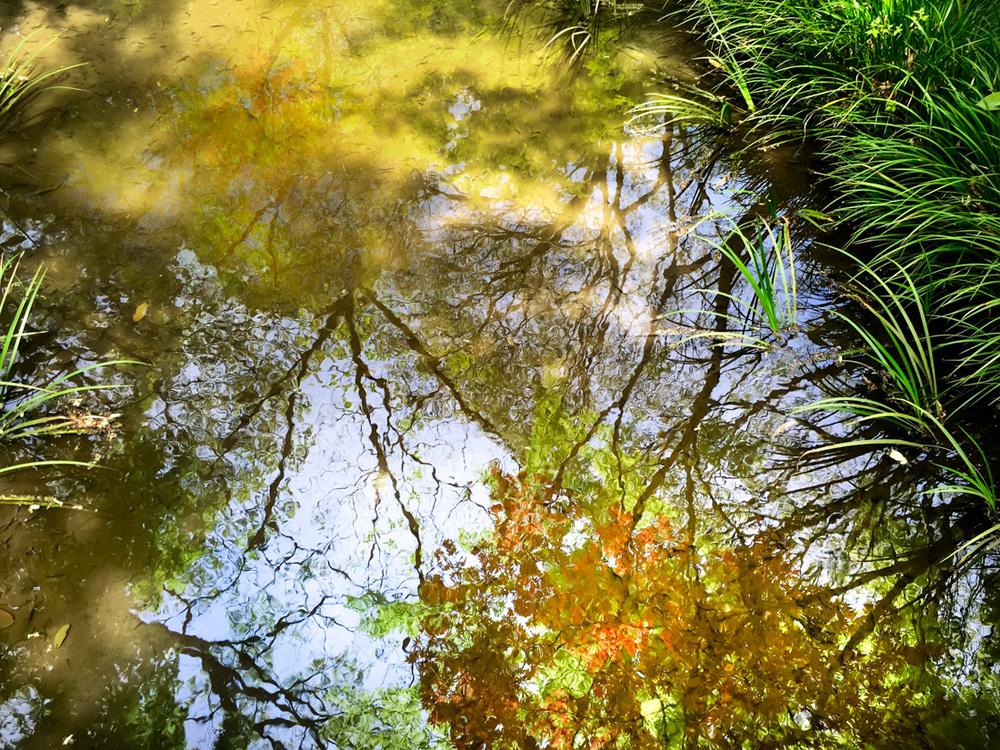 Park Reflections - Tokyo, Japan