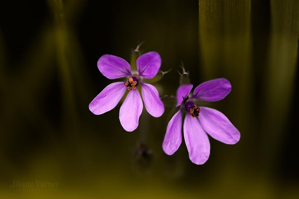 SPRING WILDFLOWERS - 5