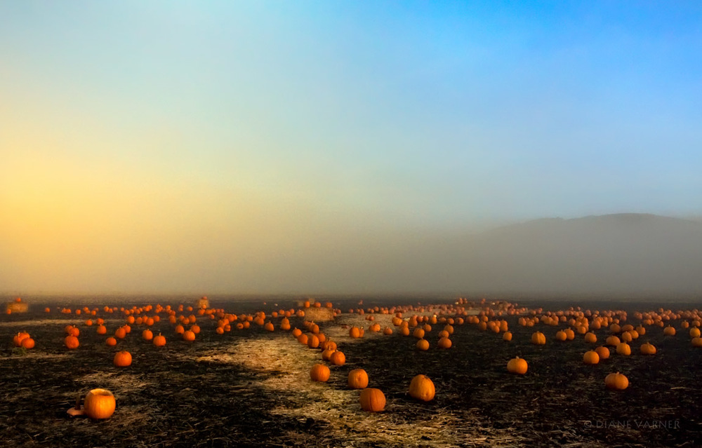 Half Moon Bay Pumpkins