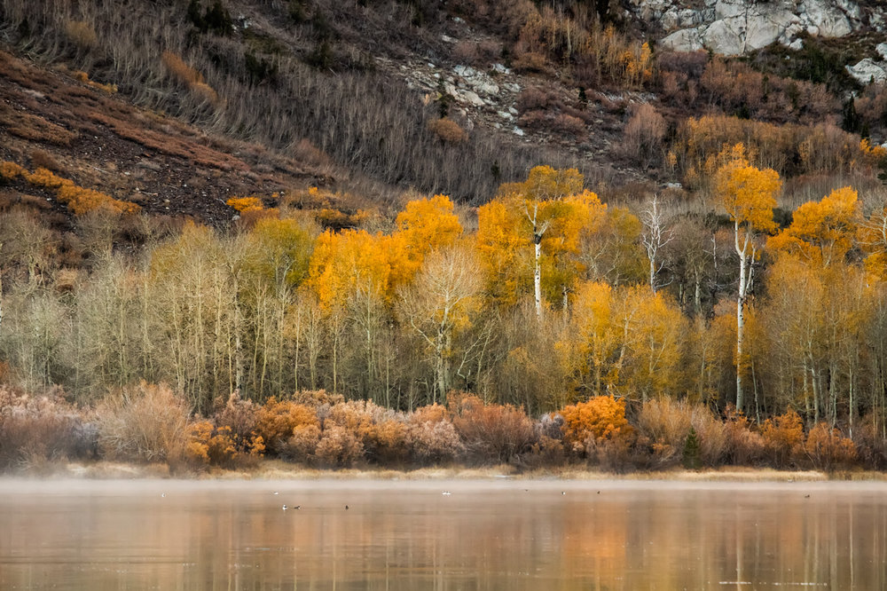 Parker Lake Autumn Foliage - Eastern Sierra