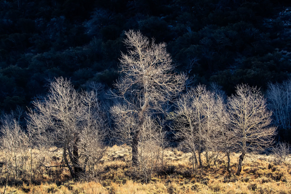 Late Autumn Trees in Eastern Sierra on a Chilly Morning Hike