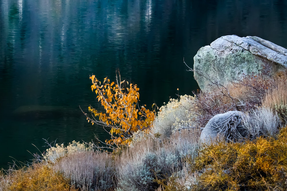 Convict Lake Shore - Eastern Sierra - Autumn Vegetation