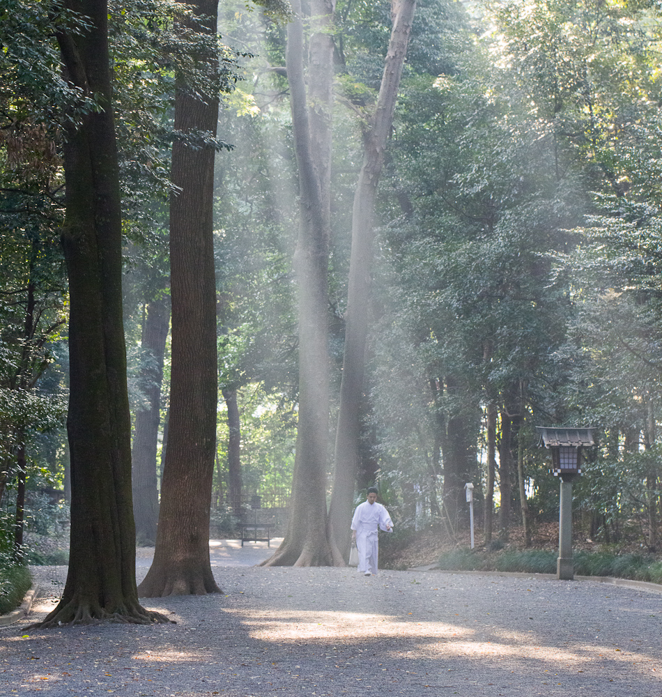 I went for a morning walk through Meiji Shrine in Tokyo last Monday and spotted this shrine attendant on his way to start his day in a very inspiring scene. These shafts of light are fairly common in the morning at this spot, although capturing an image that seems to work doesn't happen too often.