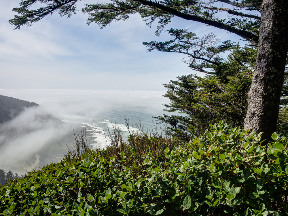 Cape Perpetua View