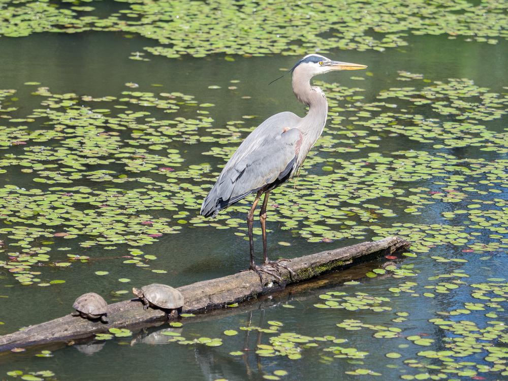 Heron Landing (3 of 3)