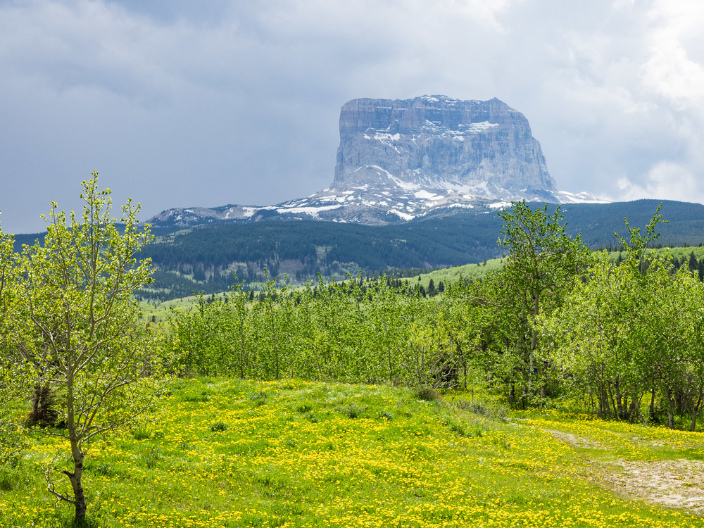 Chief Mountain from Hwy 17 (May 2015)