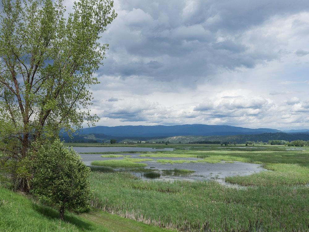 Kootenai NWR Wetland