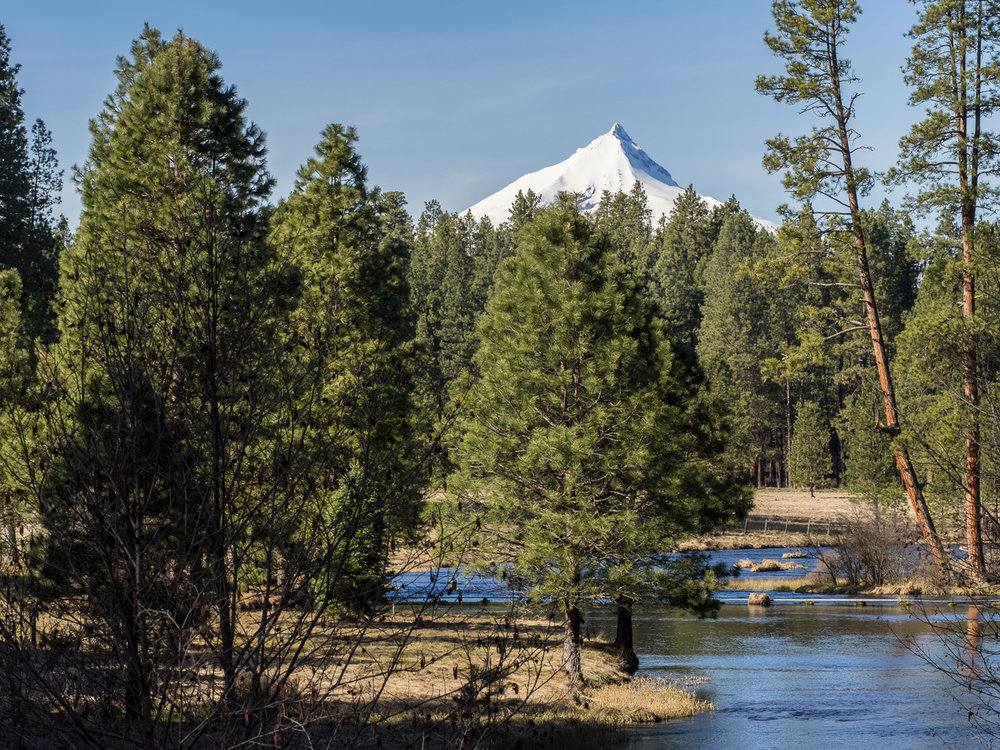 Mt Jefferson from Metolius Spring