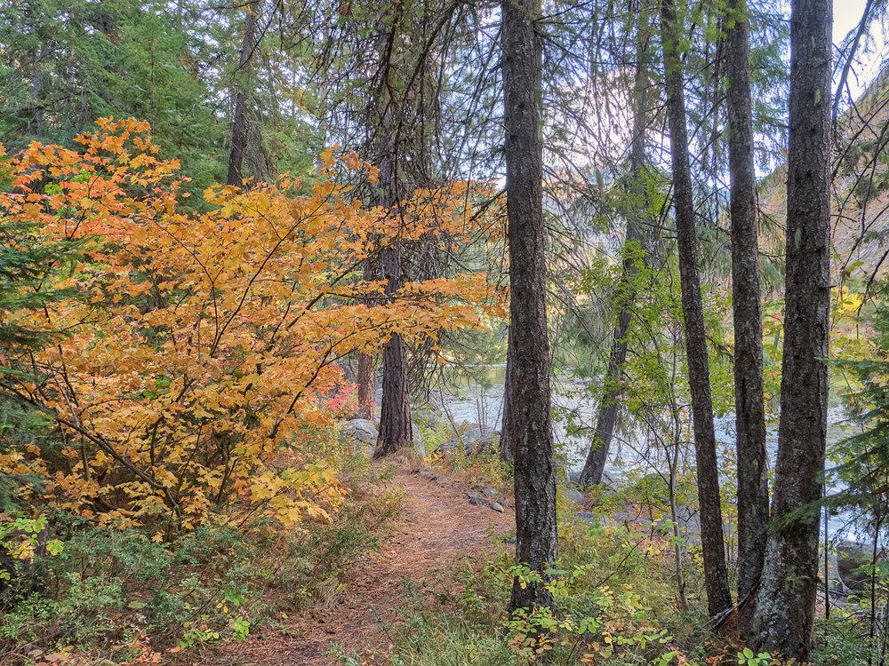 Wenatchee River Trail