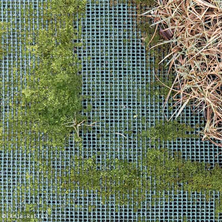 Moss growing through a garden matting.