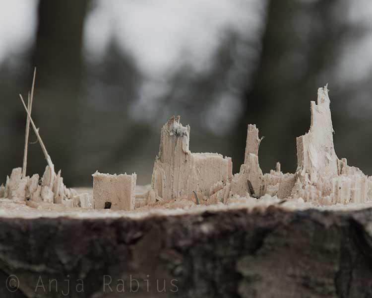 looks like a village :-)
