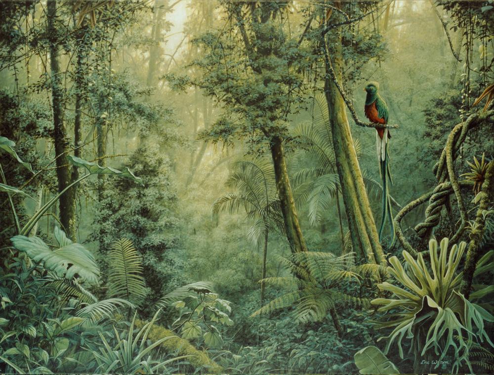 Quetzal - Costa Rica
