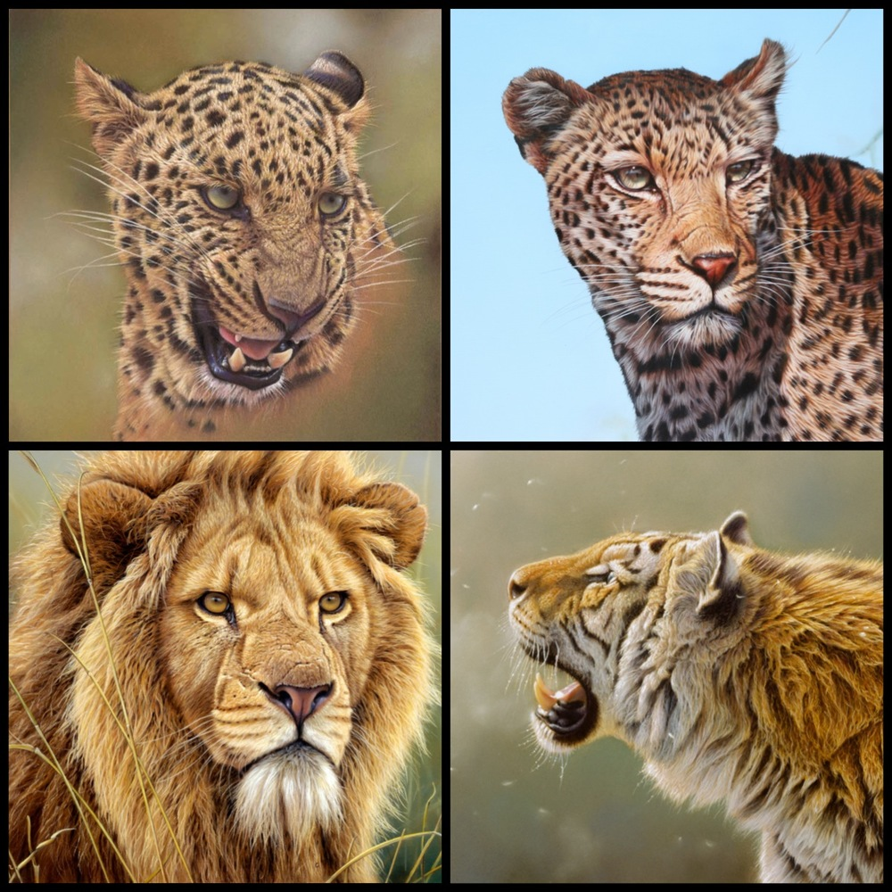 Big Cat paintings. painting of leopard, painting of tiger and painting of lion. Big cat paintings are what Eric Wilson is famous for. Siberian and Amur tigers, snow leopards, Tigers and Leopard from India and Africa. Master Wildlife Artist Eric Wilson paints in oil pastel and acrylic to produce his fine art original wildlife paintings. This website shows a gallery of paintings and giclee prints for sale direct from the Artist.