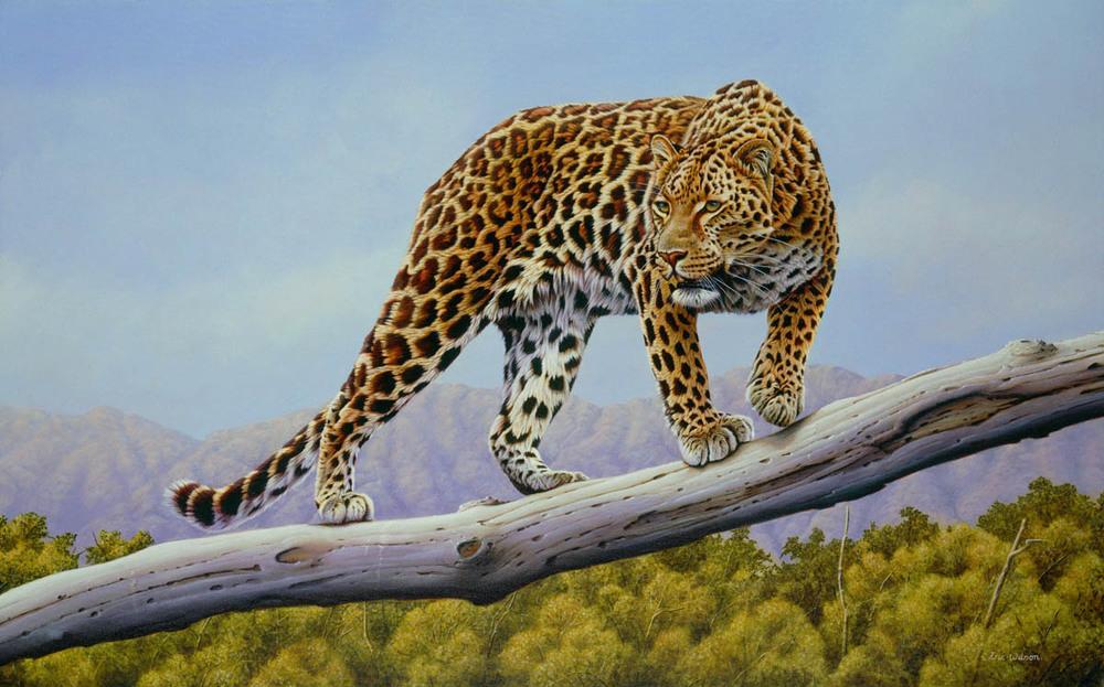 Ruckomechi Leopard