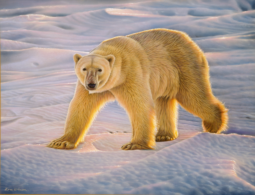 Male Polar Bear at Sundown