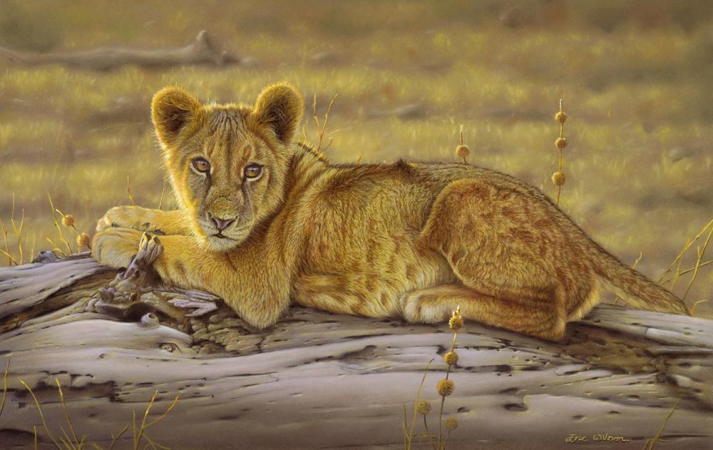 Ruckomechi Lion Cub