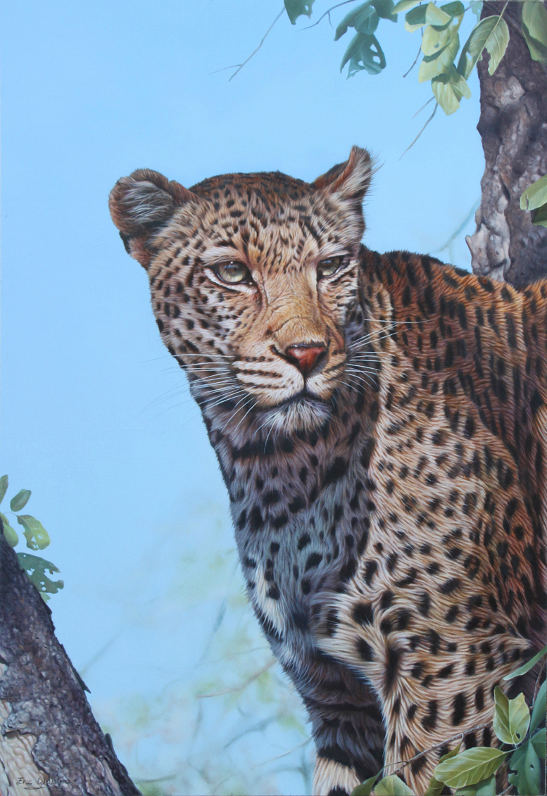 South African Leopard Portrait in oils. 20 x 29 inches.