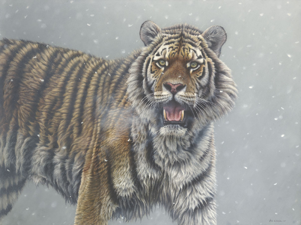 'Spirit Tiger' Oil on Board 24 by 32 Inches £3,500